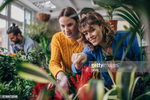 two women choosing plants at flower shop - botanical garden stock pictures, royalty-free photos & images