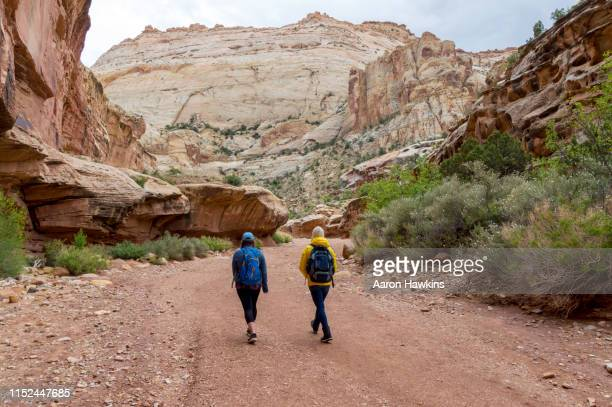 two women hiking on the grand wash hiking trail in capitol reef national park springtime flowers - capitol reef national park stock pictures, royalty-free photos & images