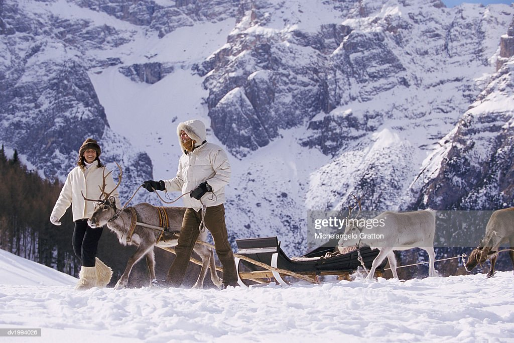 Two Women Leading Reindeer Across Snow : Stock Photo