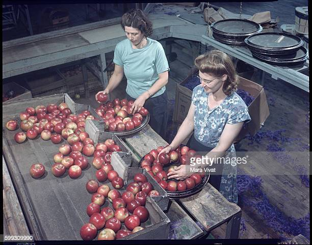 Two women pack apples at a food processing plant Virginia USA