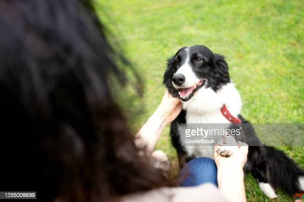 切られた犬と遊ぶ二人の女性 - 訓練犬 ストックフォトと画像