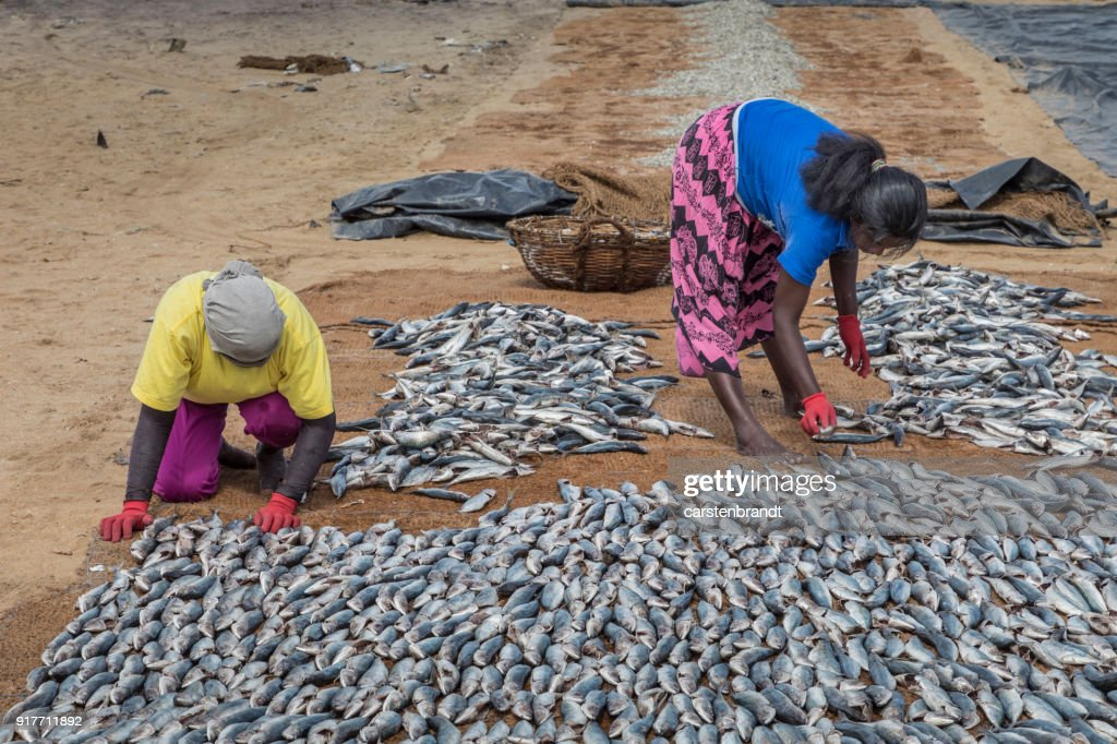Two women putting fish out to dry on the beach : Stock Photo