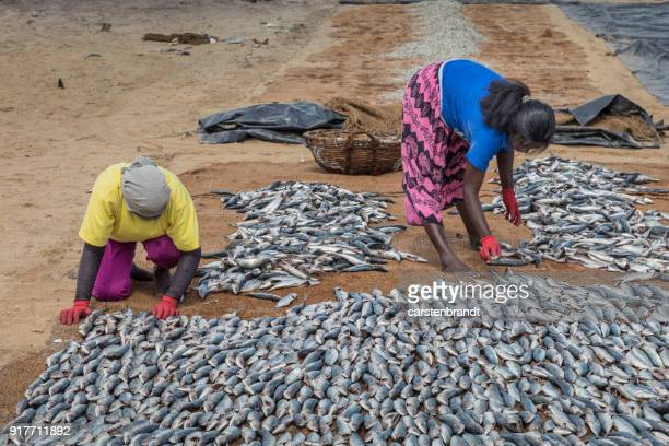Two women putting fish out to dry on the beach