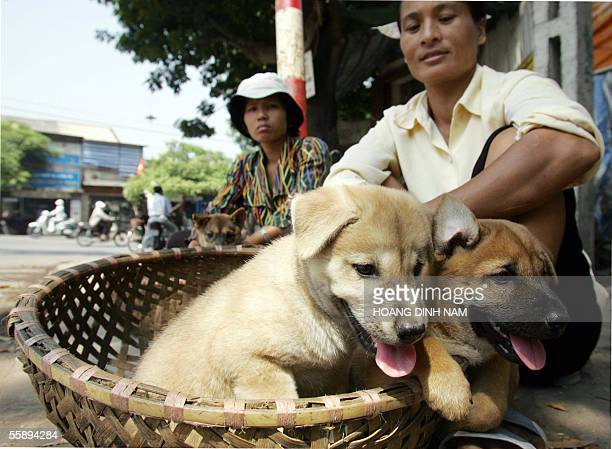 Two women sit selling young dogs at a roadside in downtown Hanoi 11 October 2005 In Vietnam where dog meat is among favorite dishes for many a lot of...