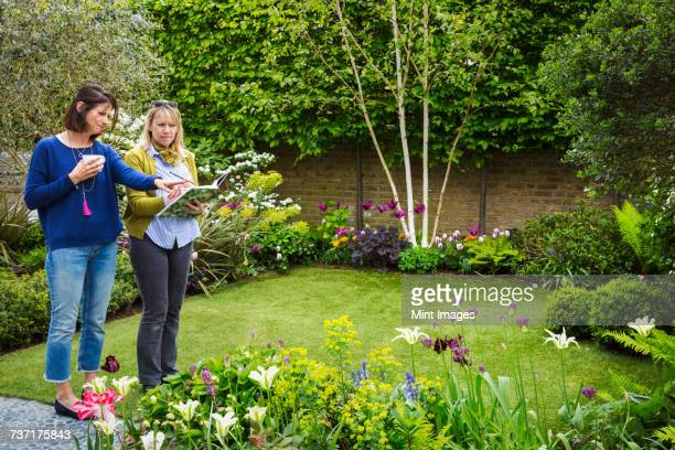 two women standing in a garden on a lawn surrounded by flowerbeds, discussing garden design. - landscaped stock pictures, royalty-free photos & images