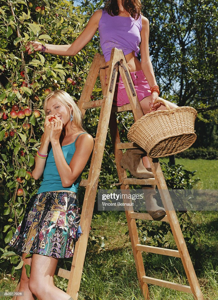 Two Women Standing on a Ladder by an Apple Tree, One Biting an Apple : Stock Photo