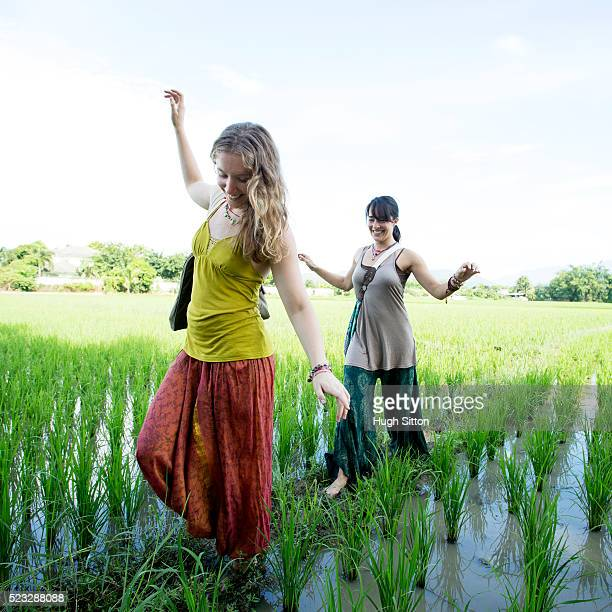 two women walking across rice paddy, chiang mai, thailand - hugh sitton stock pictures, royalty-free photos & images