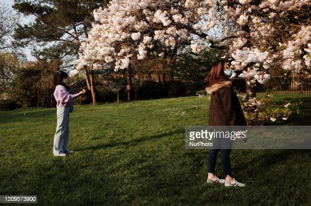 Two women wearing masks look at the blossom of a tree beside the Rose Garden of Hyde Park in London England on April 9 2020 As Britain begins what is...