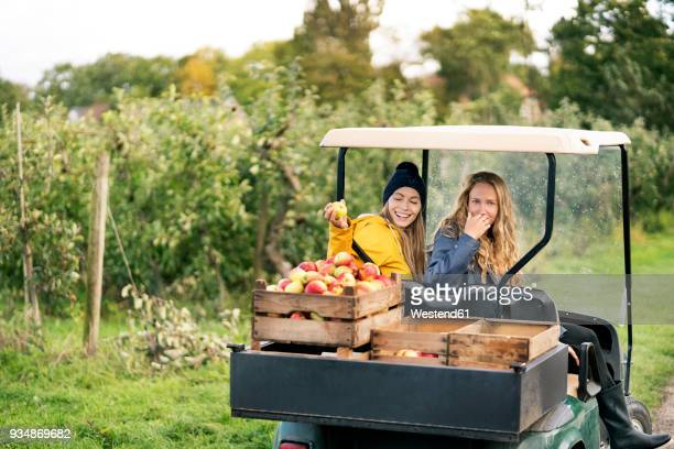 two women with vehicle harvesting apples in orchard - apple harvest stock pictures, royalty-free photos & images