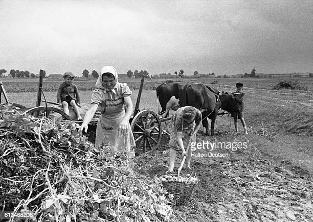 Two women working the land watched by their children in Poland The cart is drawn by oxen | Location Western Poland