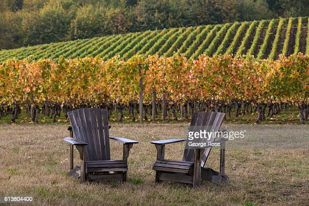 Two wooden Adirondack chairs sit at the edge of a vineyard turning color on October 5 near Hopewell Oregon Dundee Carlton McMinnville Amity and...