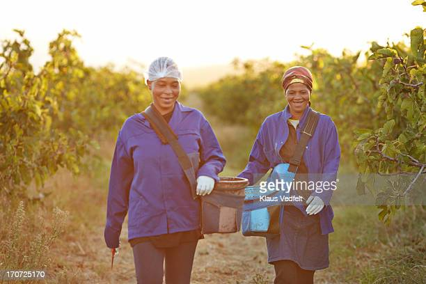 Two worker laughing together at field of fig trees