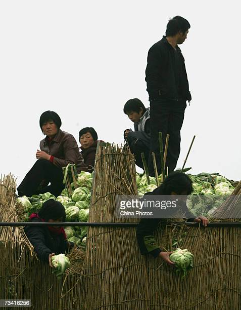 Two workers check cauliflowers at the Xinfadi Vegetable Auction Market on February 25 2007 in Beijing China Xinfadi is the largest of the 4000...
