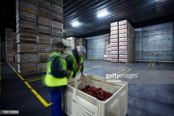 Two workers inspecting apples in distribution warehouse