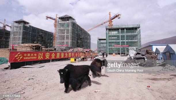 Two yaks look for food on the construction site of a new nationality middle school in Jiegu, Yushu, Qinghai, April 11, 2011. 11APR11 Photo by Simon...