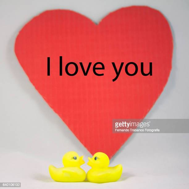 two yellow rubber duckling in love - love you stock photos and pictures