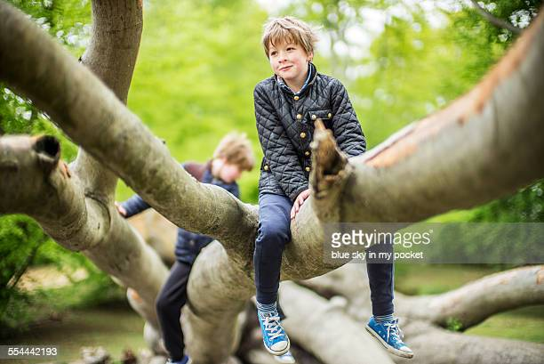 two young boys climbing a tree. - climbing stock pictures, royalty-free photos & images