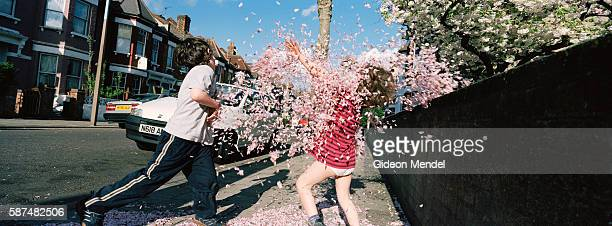 Two young boys Elias Mendel and Jonah Mendel throw blossoms at each other in the street outside their house There are a number of wild cherry blossom...