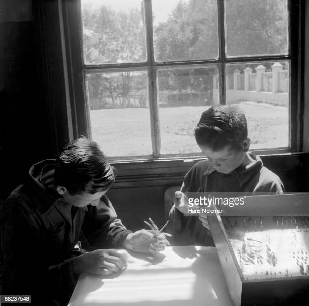 Two young boys prepare an insect case in a school classroom, Traiguen, Araucanía Region, Chile, October 1950.