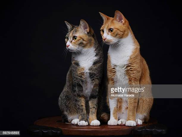 two young cats - 2匹 ストックフォトと画像