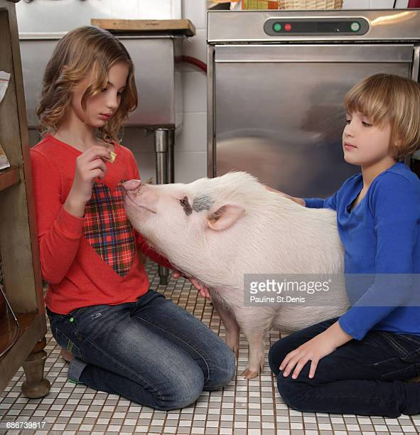 'Two young girls in kitchen, feeding pet pig'