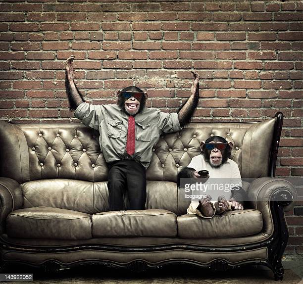 two young male chimpanzees watching 3d movie - primate stock pictures, royalty-free photos & images