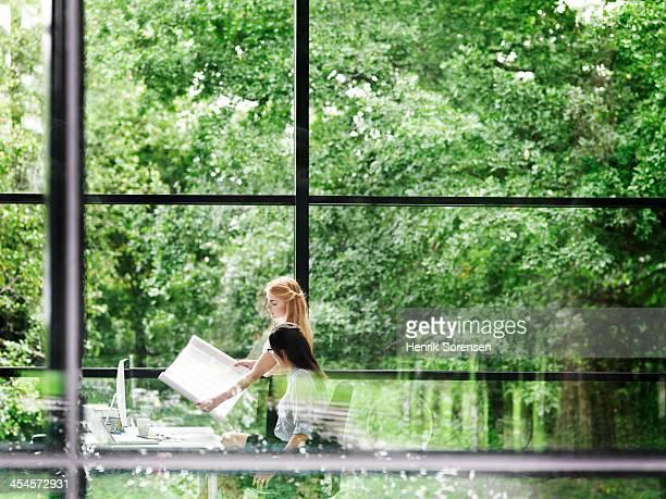 two young professional women work together - weelderige plantengroei stockfoto's en -beelden