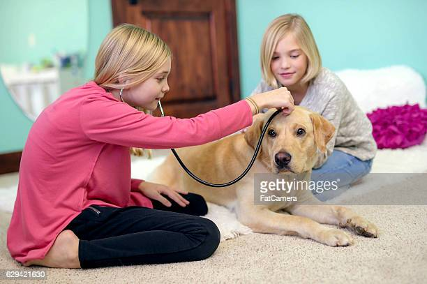 Two young sisters playing veterinarian at home with their labrador