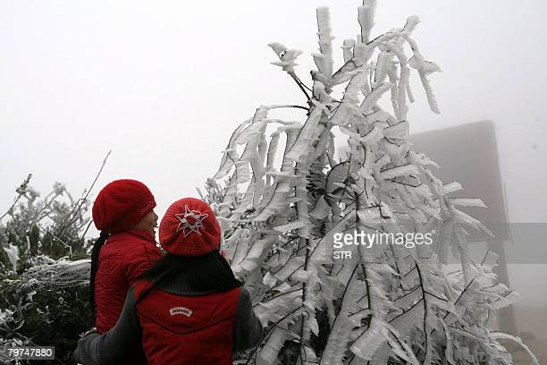 Two young tourists look at an icecovered tree in the northern mountainous region of Sapa in the province of Lao Cai on February 13 2008 A monthlong...