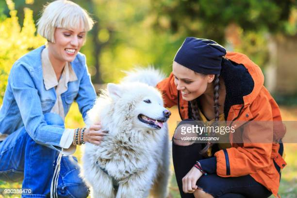 サモエド犬との時間を楽しんでいる 2 人の若い女性 - 動物調教師 ストックフォトと画像