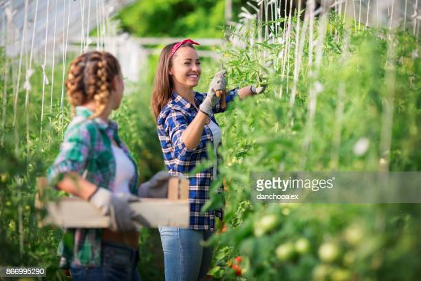 Two young women working in greeenhouse