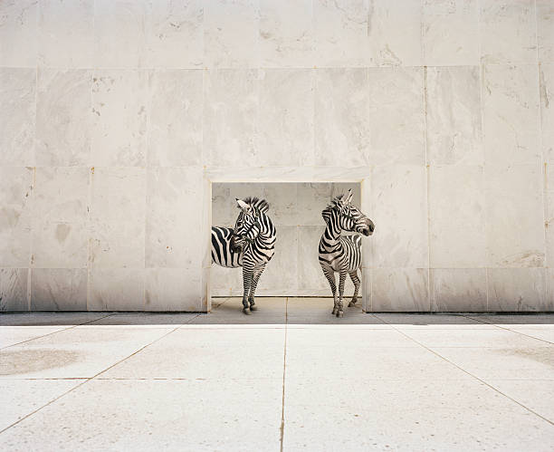 two zebras at doorway of large white building