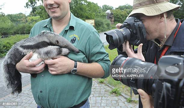 """Two-month-old giant anteater is presented to the press at Berlin's Zoologischer Garten Zoo, on July 8, 2008. """"Adolpho"""" was born in captivity of..."""