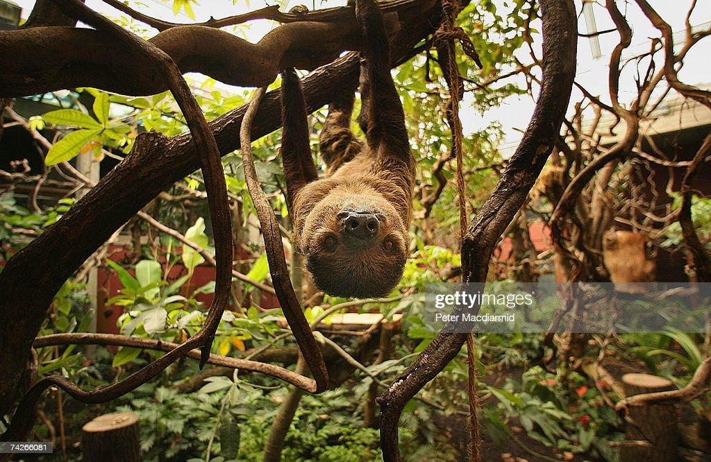 New Rainforest Exhibit Home To World's Smallest Monkeys : News Photo