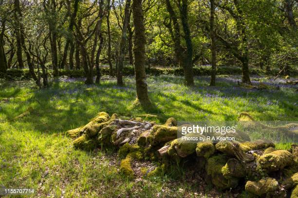 ty canol nature reserve, pembrokeshire, wales - newport wales photos stock pictures, royalty-free photos & images