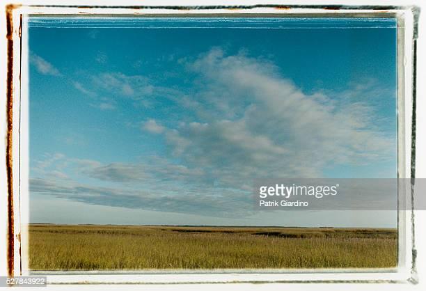 Tybee Island Plains