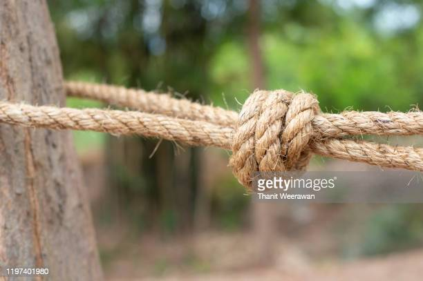 tying a jute hemp rope with the tree - グレーターマニラエリア ストックフォトと画像