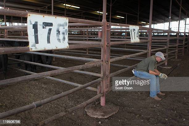 Tyler Young takes a brief break from moving cattle to the auction block at the Abilene Livestock Auction July 26 2011 in Abilene Texas A severe...