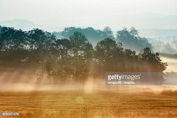 tyndall phenomenon over anseongmokjang ranch - light natural phenomenon stock pictures, royalty-free photos & images