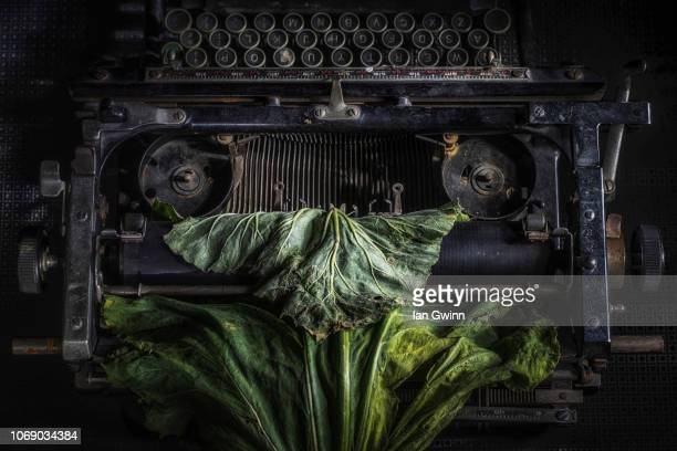 typewriter and rhubarb - ian gwinn - fotografias e filmes do acervo