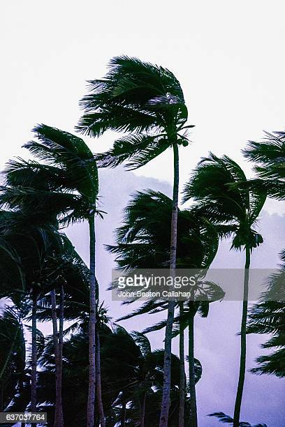 typhoon wind - gale stock photos and pictures