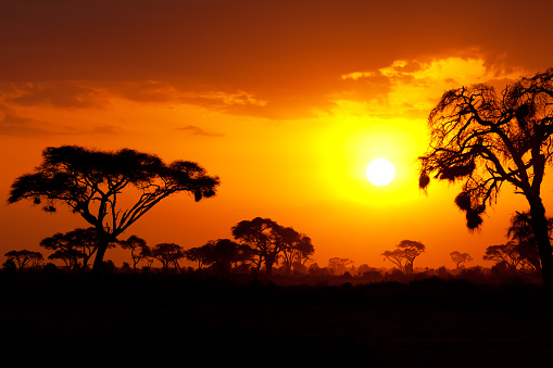 Typical african sunset 502675798