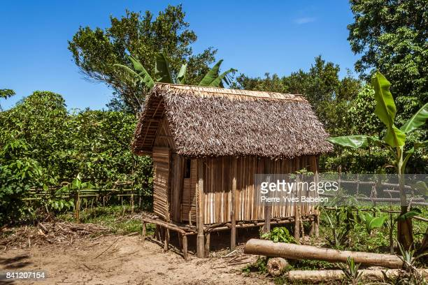 typical betsimisaraka house - shack stock pictures, royalty-free photos & images