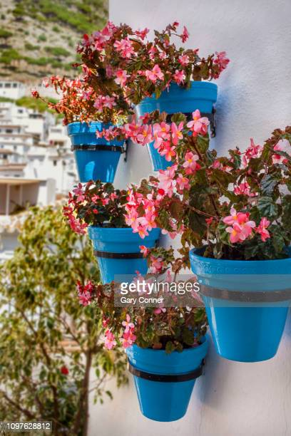 typical blue pots with begonia flowers in spain - begonia stock pictures, royalty-free photos & images