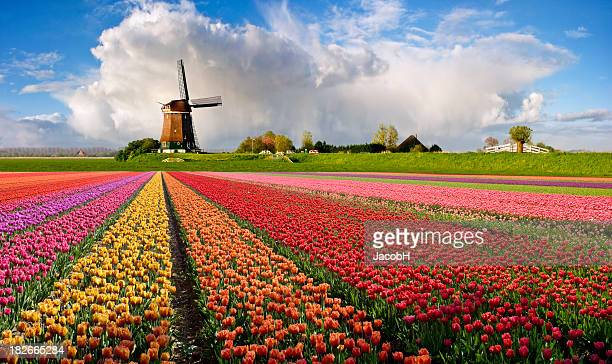 Typical Dutch Spring Landscape
