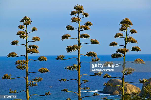 Typical flora in Cabo de Gata.