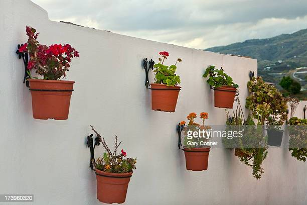 Typical geraniums on wall