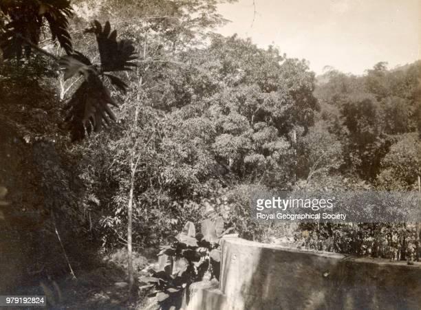 Typical jungle in Trinidad, Trinidad and Tobago, 1924.