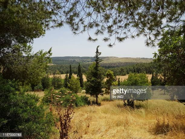 a typical landscape of the jerusalem / judean foothills' vegetation with conifers, eshta'ol forest - foothills stock pictures, royalty-free photos & images