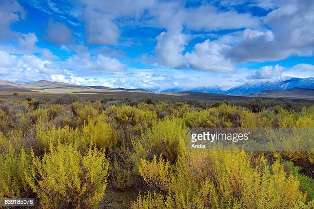Typical landscape of the Karoo a semidesert natural region Camdeboo National Park near the Eastern Cape town of GraaffReinet South Africa
